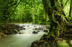 Floresta húmida e rio tropicais Fotografia de Stock Royalty Free