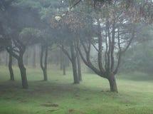 Floresta húmida enevoada no Madeira Imagem de Stock