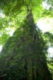 Floresta húmida luxúria Fotografia de Stock Royalty Free