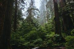 Floresta húmida noroeste pacífica Fotografia de Stock
