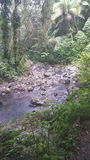 Floresta húmida porto-riquenha Fotos de Stock