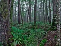 Floresta húmida temperada foto de stock