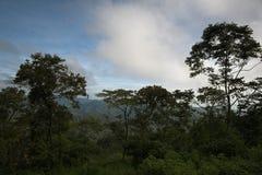 Floresta húmida tropical Fotografia de Stock