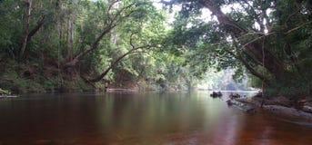 Floresta húmida tropical Fotos de Stock