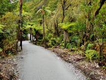 Floresta húmida tropical Imagem de Stock