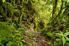 Floresta húmida tropical no parque nacional, Equador fotos de stock