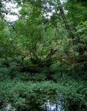 Floresta húmida, Washington imagem de stock royalty free