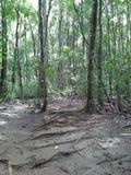 Floresta, Hadyai Songkhla, Tailândia Fotos de Stock