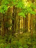 Floresta HDR vertical 1 Imagens de Stock