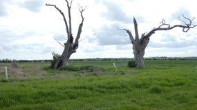 Floresta hirto de medo antiga dos dríades do carvalho que aprecia o dia que comemora 2000 anos 3 fotos de stock