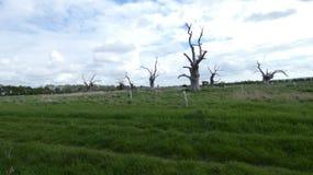 Floresta hirto de medo antiga dos dríades do carvalho que aprecia o dia que comemora 2 imagens de stock royalty free