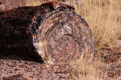 Floresta hirto de medo, o Arizona, EUA Fotos de Stock