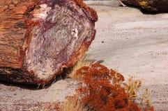 Floresta hirto de medo, o Arizona, EUA Foto de Stock Royalty Free