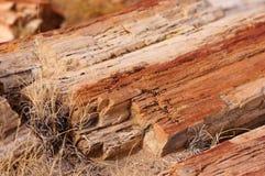 Floresta hirto de medo, o Arizona, EUA Fotos de Stock Royalty Free