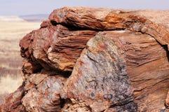 Floresta hirto de medo, o Arizona, EUA Imagens de Stock