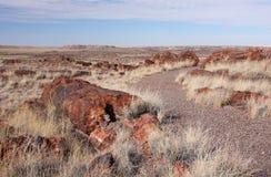 Floresta hirto de medo, o Arizona, EUA Imagem de Stock