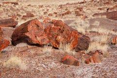 Floresta hirto de medo, o Arizona, EUA Fotografia de Stock Royalty Free