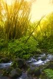 Floresta húmida Imagens de Stock