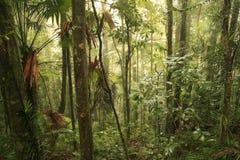 Floresta húmida Fotografia de Stock Royalty Free