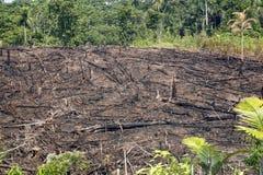 Floresta húmida queimada para a agricultura Foto de Stock