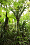 Floresta húmida tópica   Foto de Stock Royalty Free