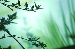 Floresta ideal Fotografia de Stock