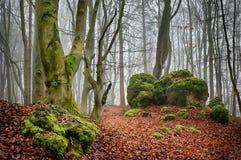 Floresta II da faia Imagem de Stock