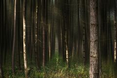 Floresta II do conto fotos de stock royalty free