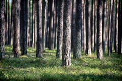 Floresta ilimitada imagens de stock