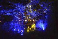 Floresta iluminada Fotografia de Stock Royalty Free