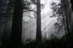 Floresta iluminada Fotos de Stock Royalty Free