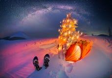 Floresta iluminada do inverno nos Carpathians fotografia de stock