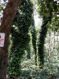 Floresta india sul foto de stock