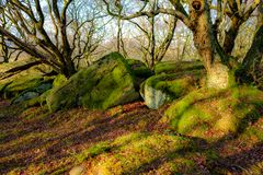 Floresta inglesa com carvalhos fotografia de stock