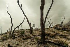 Floresta inoperante imagem de stock
