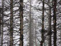 Floresta inoperante Imagens de Stock Royalty Free