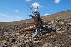 Floresta inoperante Foto de Stock Royalty Free