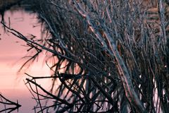 Floresta inoperante fotos de stock royalty free