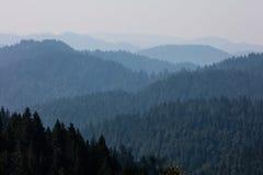 Floresta interminável da sequoia vermelha em Califórnia do norte Fotografia de Stock Royalty Free