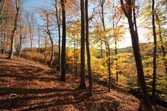 Floresta interna foto de stock