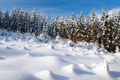 Floresta invernal Imagens de Stock Royalty Free