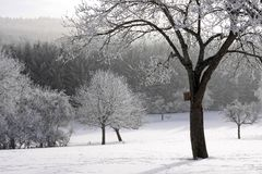 Floresta invernal coberto de neve Foto de Stock Royalty Free