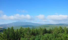 Floresta israelita Foto de Stock