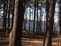 Floresta a lakeshore Imagem de Stock Royalty Free