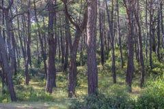 Floresta larga dianteira do tiro sob a luz da tarde fotos de stock