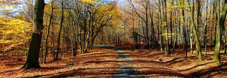 Floresta/floresta largas das árvores da folha com a estrada do cascalho na luz do dia da tarde do outono imagem de stock royalty free