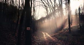 Floresta legendária fotografia de stock royalty free