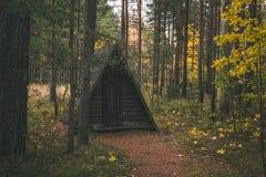 Floresta letão em outubro Fotografia de Stock Royalty Free
