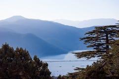 Floresta libanesa do cedro em Turquia, Elmali Imagem de Stock Royalty Free
