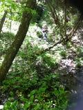 Floresta lunática Imagem de Stock